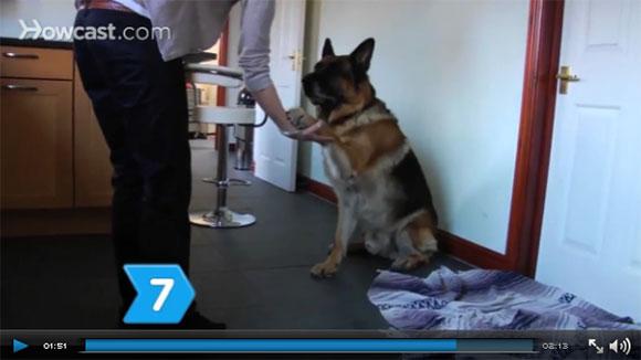 Ensinar cão truques